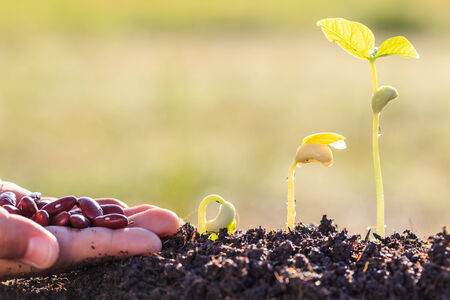 plant growth: Hand holding seed and growth of young green plant in soil