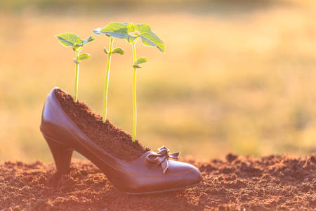 crecimiento planta: Crecimiento de la planta joven en zapato de la se�ora, el concepto de reciclaje