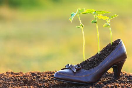 pflanze wachstum: Junge Pflanzenwachstum in Damenschuh, Recycling-Konzept