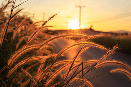 wild grass beside the road at sunset background photo