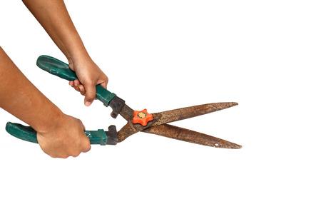 Hand holding Old garden scissor isolated on white background photo