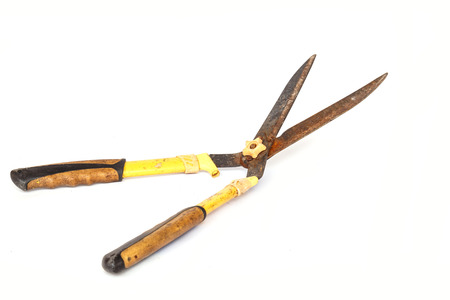 Old and rusty garden scissor isolated on white background photo