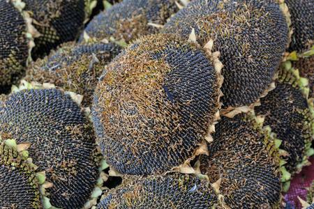 Close up Sunflower seed photo