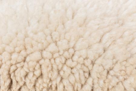 Laine de mouton gros plan