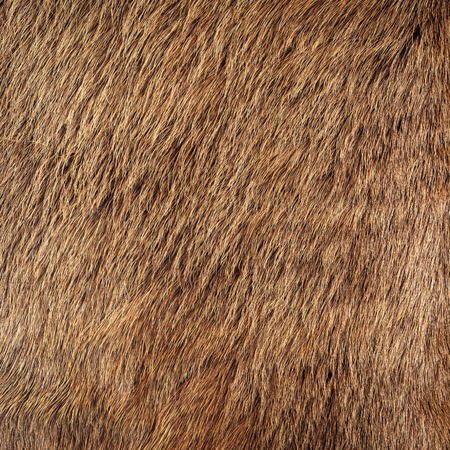 fur: horse fur Stock Photo