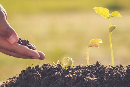 plant seed: Hand holding seed and growth of young green plant