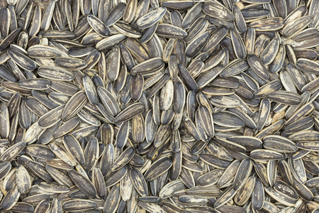 uses: Sunflower seeds for background uses