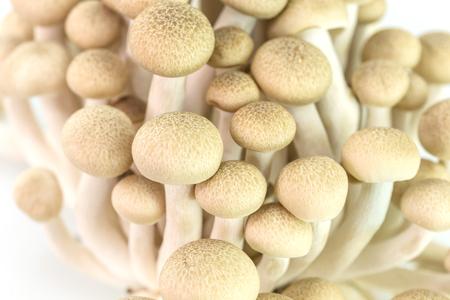 brown beech mushrooms or shimeji mushrooms isolated on white background photo