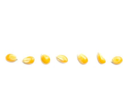 maiz: Cierre de maíz grano amarillo aislado en blanco