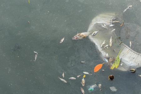 dead fish: Dead fish in the sea, environment concept
