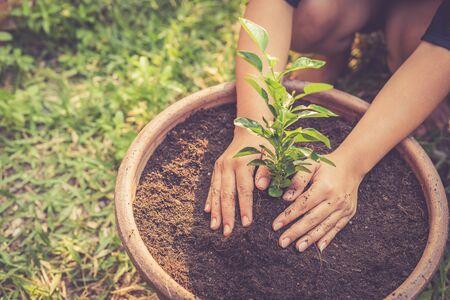lemon: Cierre de mano que sostiene joven �rbol de cal en el suelo, efecto de filtro Retro