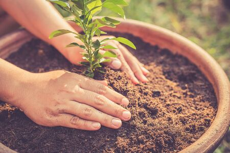 soil: Close up Hand holding young lime tree on soil, Retro filter effect Stock Photo