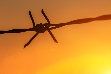 Macro silhouette of Barbed wire on sunset background