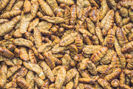 silkworm: Close up stack of silkworm pupae pattern for background