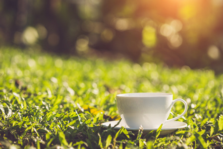 Close up white coffee cup in the garden at morning time
