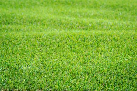 pasto sintetico: Modelo del verde c�sped artificial para la textura y el fondo