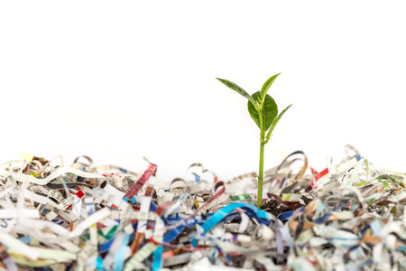 reciclaje papel: Planta verde joven en la pila de papel de desecho del cortador de papel