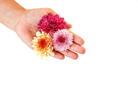 hand holding flower: Close up Hand holding Flower isolated on white background