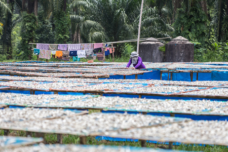 thai people: Thai people are turning to fish that are dried in the sun.