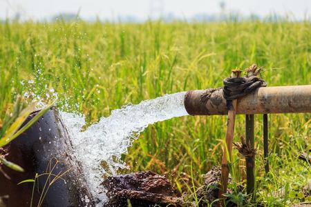Scorrimento dell'acqua dal grande tubo della pompa nel giacimento del riso nel centro della Tailandia, fuoco sul tubo