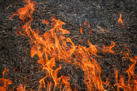fever plant: Fire burning dry grass field in Ratchaburi, Thailand Stock Photo