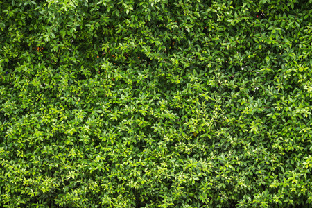 Patroon van groene planten muur textuur en achtergrond Stockfoto - 58213340