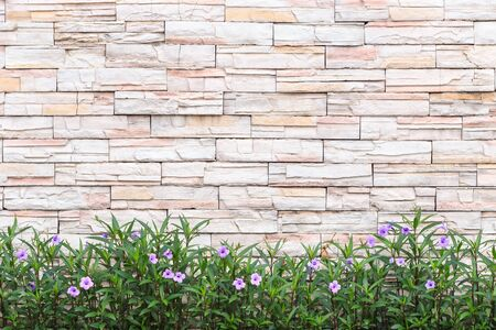 Pattern of white natural stone wall and flower plant. Garden decorative
