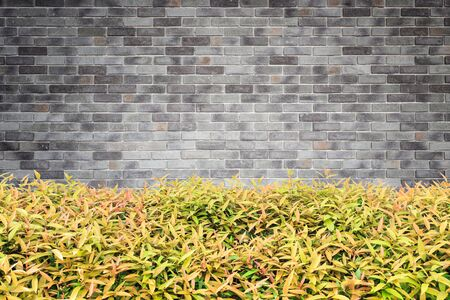 Green Plant In Planter Box Hanging On White Cement Wall. Garden ...