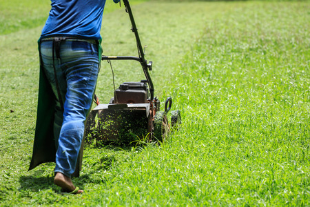 mowing grass: A man mowing grass in the garden