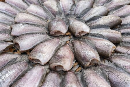 striped snakehead fish: New fish dried under the sun prepare for cook in in market, Thailand