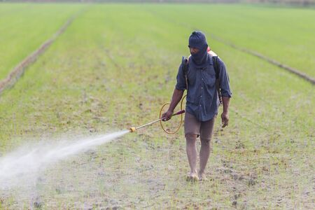 CHAI NAT, THAILAND - DECEMBER 11, 2016: An unidentified people Thai farmer spraying chemical to green young rice field in Chai Nat on December 11, 2016.