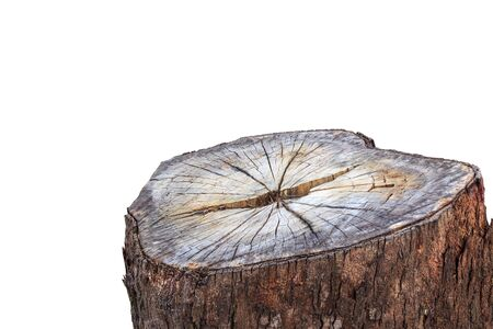 help section: Close up tree stump isolated on white background. Saved with clipping path
