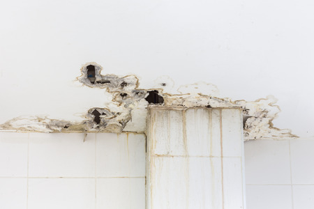 White ceiling inside the building get damaged showing moisture and dirty mold by water leaking and
