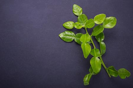 Fresh leaves of Bergamot tree or kaffir lime leaves on black stone table background. Top view Stock Photo - 88366752