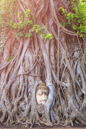 Head of the sandstone buddha in the big tree root. At Ayutthaya Historical Park in Ayutthaya province, Thailand