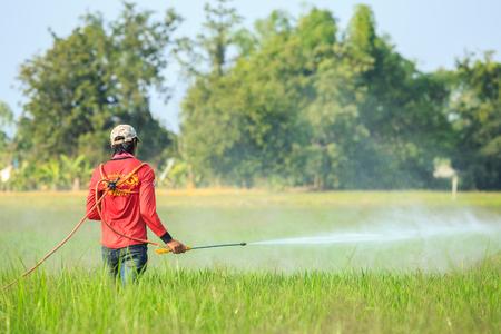 SUKHOTHAI, THAILAND - JANUARI 6, 2018: Een niet-geïdentificeerde mensen die chemisch aan groen jong rijstveld in Sukhothai spuiten op 6 januari 2018.