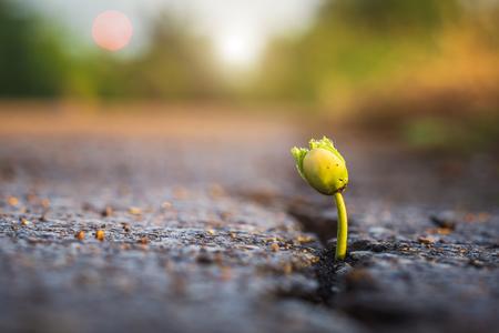 Macro een groen jong zaadje van boom groeit uit scheuren van asfaltweg. Milieu concept