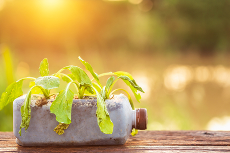 Plastic recycle concept : Dead plant or vegetable in plastic bottle on wooden table with sunlight in morning time Stock Photo