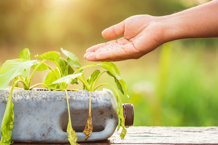 Plastic recycle concept : Hand of people giving fertilizer to vegetable in plastic bottle on wooden table with sunlight in morning time