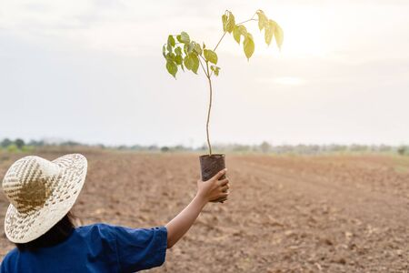 Young farmer holding small tree in empty land for planting. Environment concept