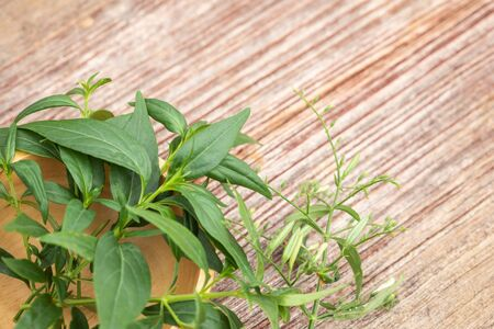 Close up green Andrographis paniculata or green chireta on wooden table. Herb concept
