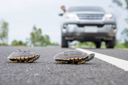 Close up turtle crossing the road. Driver stop the car to let turtle walking on the road. Safety and be careful driving concept Stok Fotoğraf