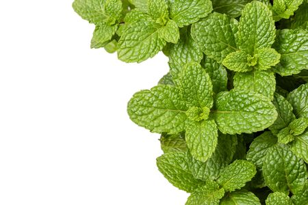 Close up green fresh peppermint isolated on white background