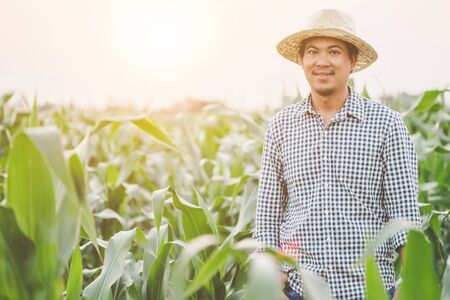Asian farmer working in the field of corn tree and research or checking problem about aphis or worm eating on corn leaf after planting Foto de archivo