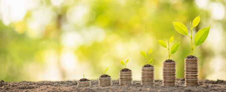 Different level of coin stack with young green sprout on top. Business success, Financial or money growing concept Banque d'images