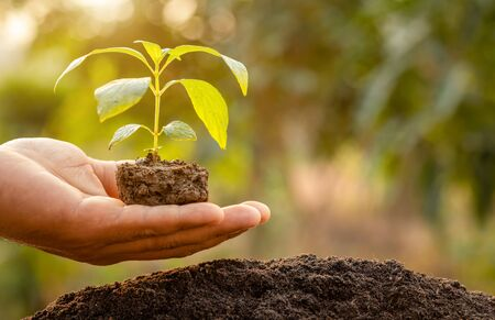 Close up hand holding young green tree sprout and planting in soil. Home and garden decoration concept Stockfoto