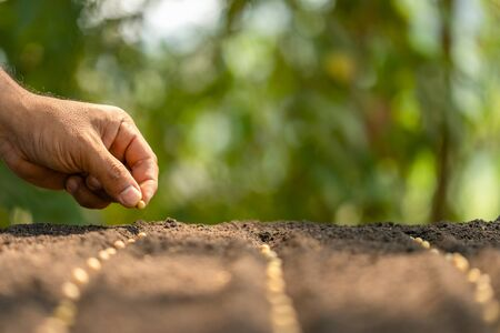 Macro hand of farmer planting a brown seeds in soil. Growth and environment concept
