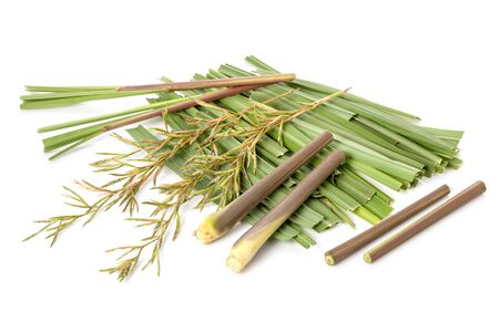 Flower and leaf of red Lemongrass or citronella grass. Studio shot isolated on white background Banque d'images