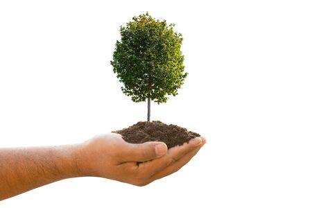 Schließen Sie herauf Hand, die Boden und tropische Baumjunge lokalisiert auf weißem Hintergrund hält. Wachstums- und Umweltkonzept