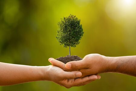 Close up hand of two people holding tree in soil on outdoor sunlight and green blur background. Planting the tree, Save world, or growing and environment concept